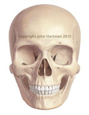 female-skull