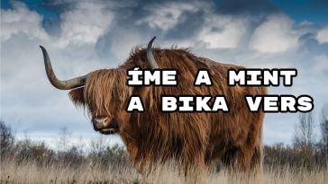 Jöjjön Radnóti Miklós - Mint a bika verse