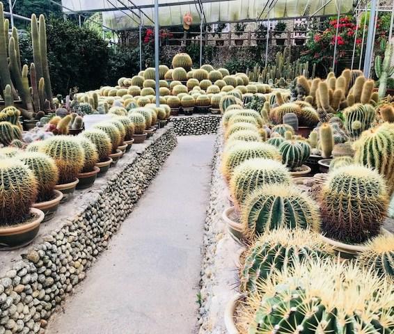 Cameron Highlands cactus garden