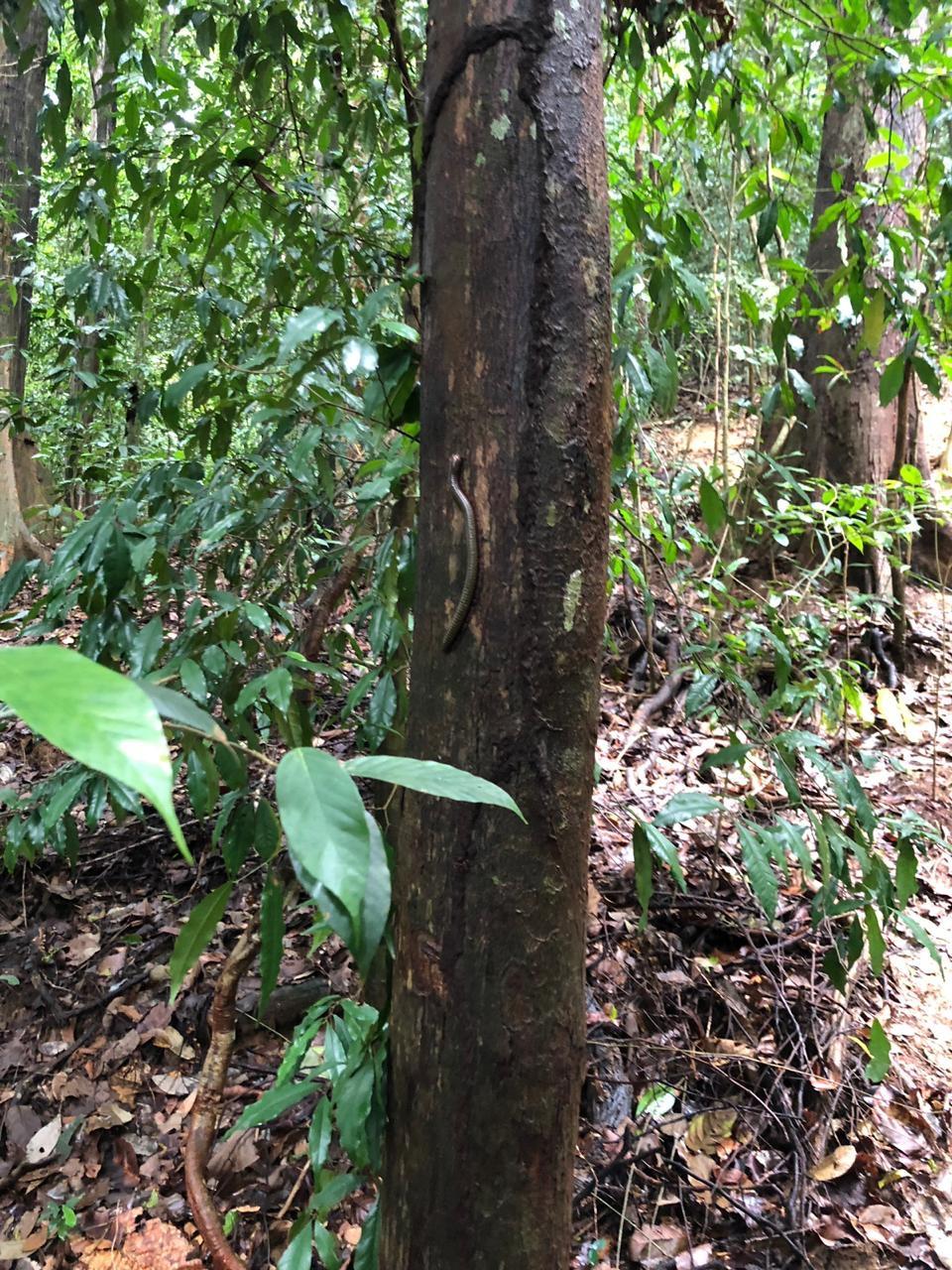 Friends in the jungle, the millepede.