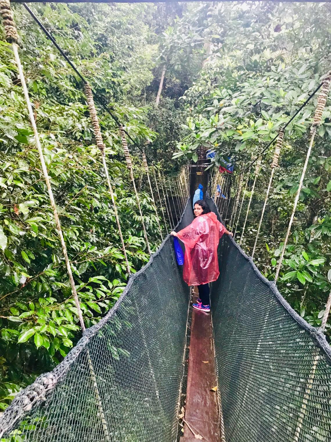 Kinabalu National park 4