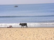 A restful morning on the beach in Gokarna