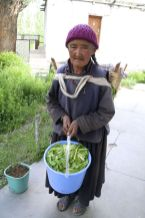 An aunty who helps with the garden at The Gobi Guest House