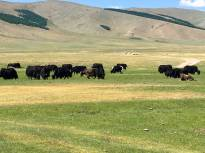 We're getting into yak territory.