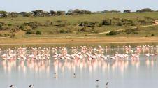 Tanzanian Trip #2 465
