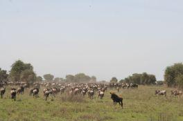 Tanzanian Trip # 3 126