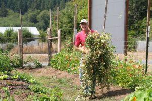 Good Cheer & Chinook gardens, Mt. Baker, part 1 095