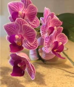 orchids mom june 2016