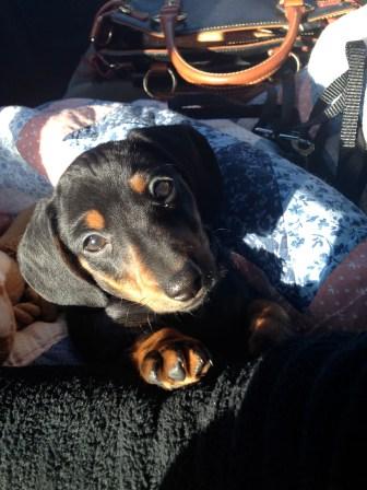 Ryman, the pup.