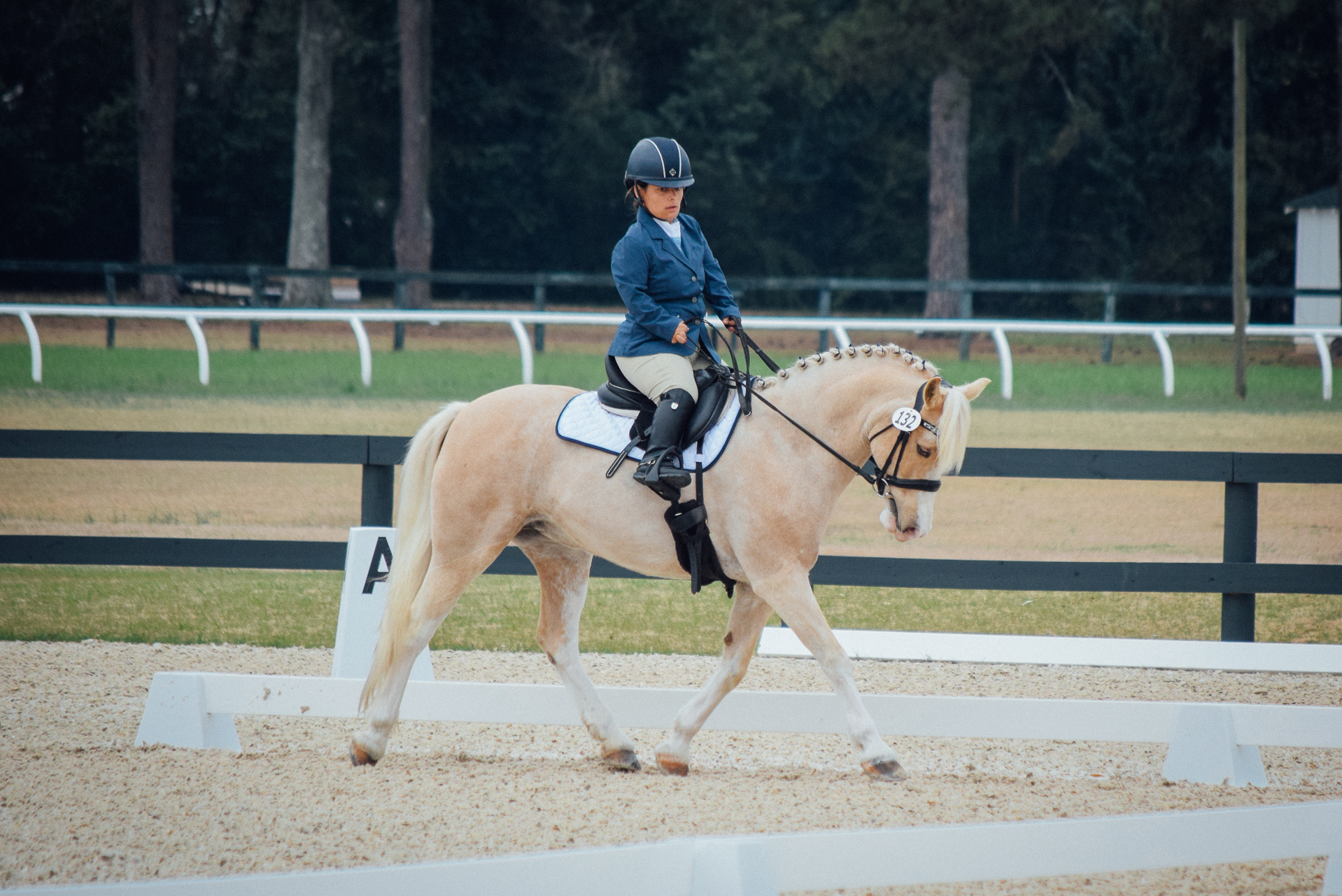 Dressage at Bruce's Field