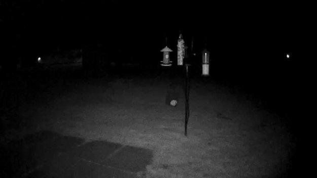 Backyard Picture Night Cam
