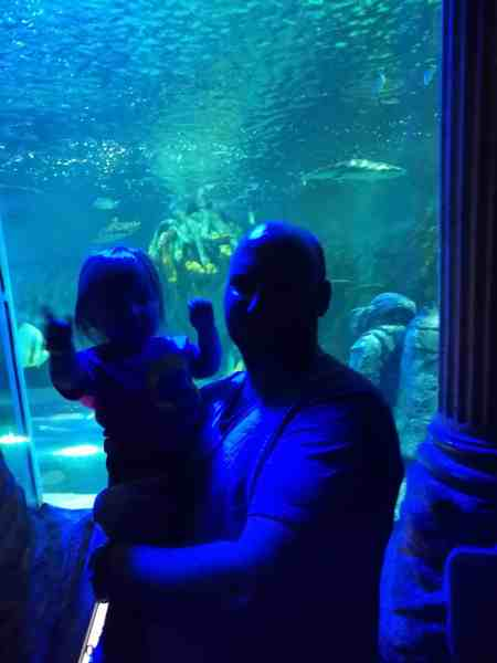 Sealife Great Yarmouth Review Me Him The Dog And A Baby