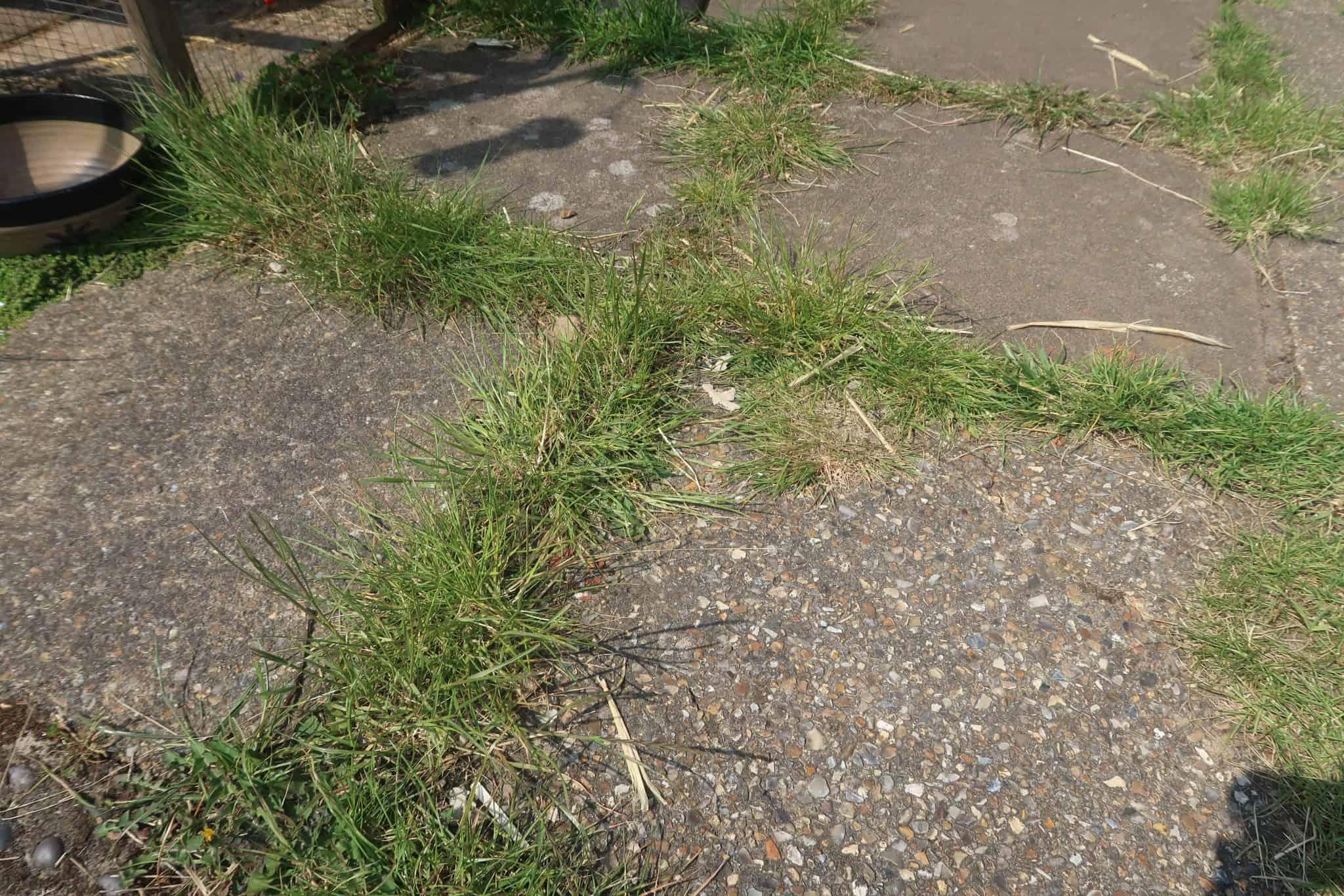 VonHaus 2 In 1 Grass And Hedge Trimmer
