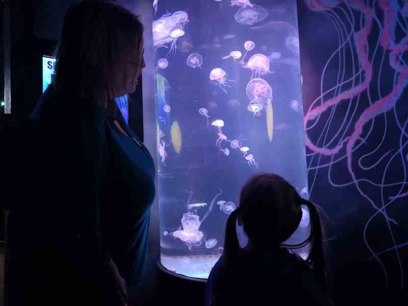 Sea Life Great Yarmouth Jelly Invaders