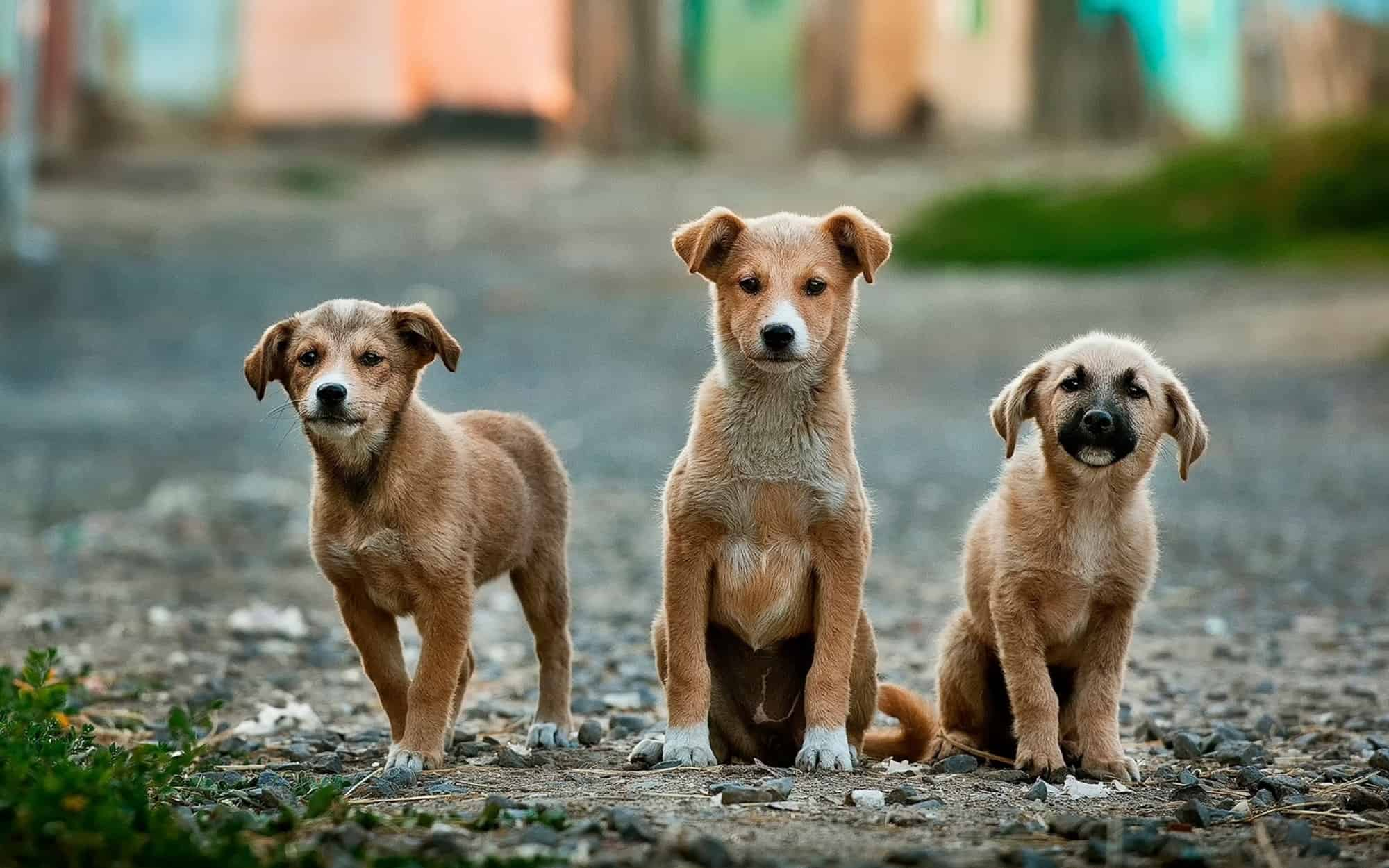 Three dogs sitting together