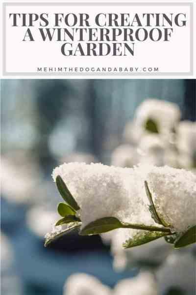 Tips for Creating a Winterproof Garden