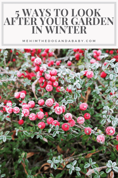 5 Ways To Look After Your Garden In Winter