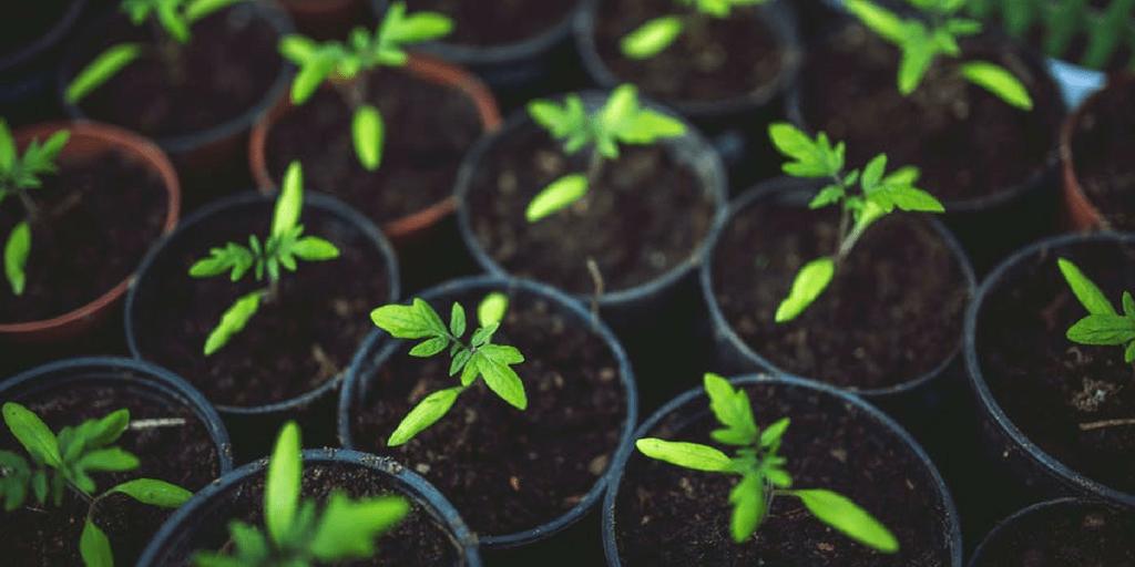 How To Get Children Interested In Gardening