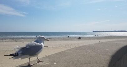 October Seabird Posing