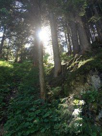 Wald-Ansichten