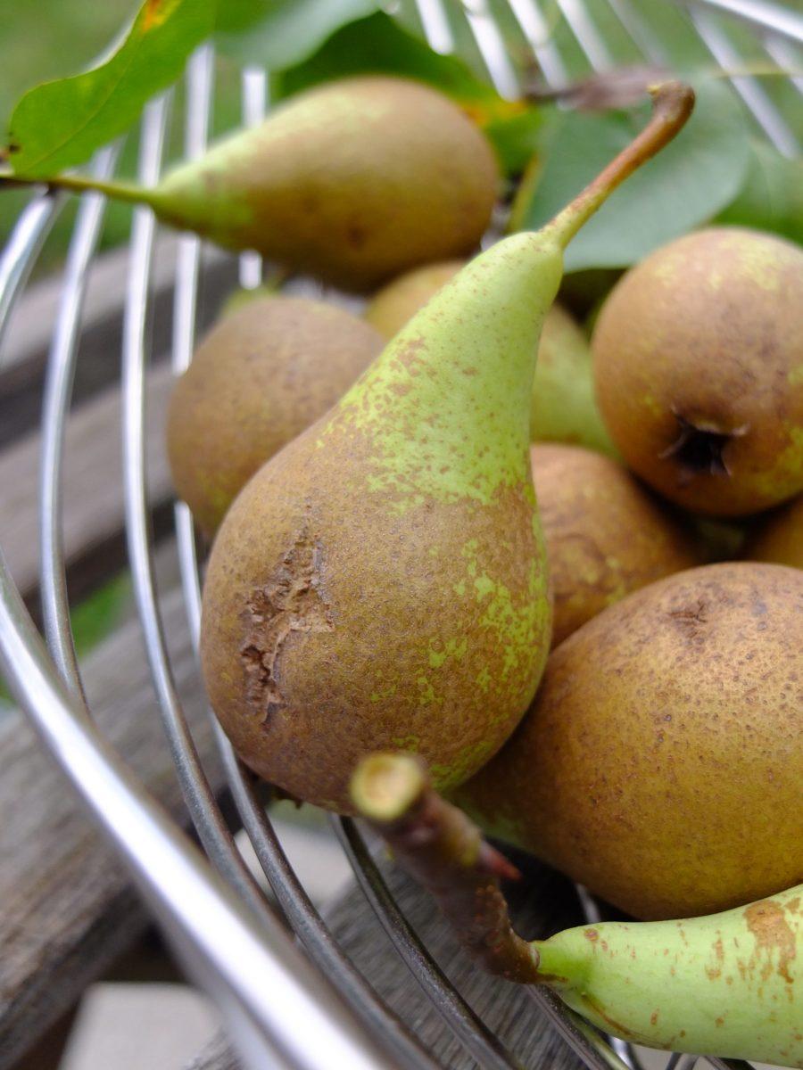 Birnen-Ingwer-Konfitüre