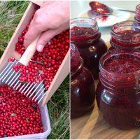 Von Granten und selbst gemachter Preiselbeer-Marmelade