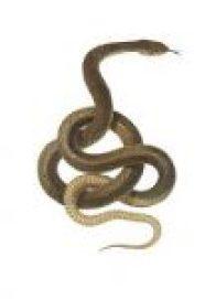 Mongoose and snake panchatantra story in hindi