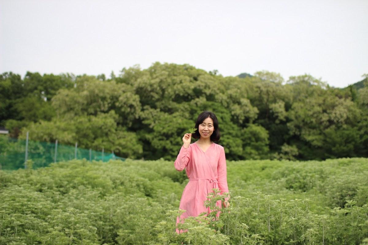 韓国よもぎ畑視察-花粉症の記事用