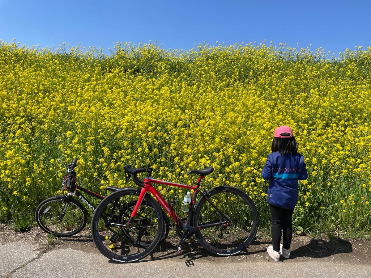 菜の花と自転車散歩