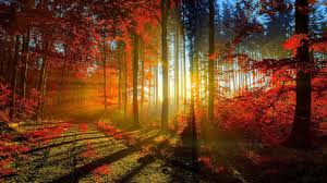 nature-forest-sun