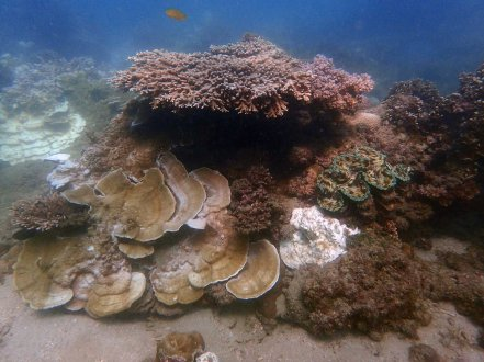 Partial bleaching on reef