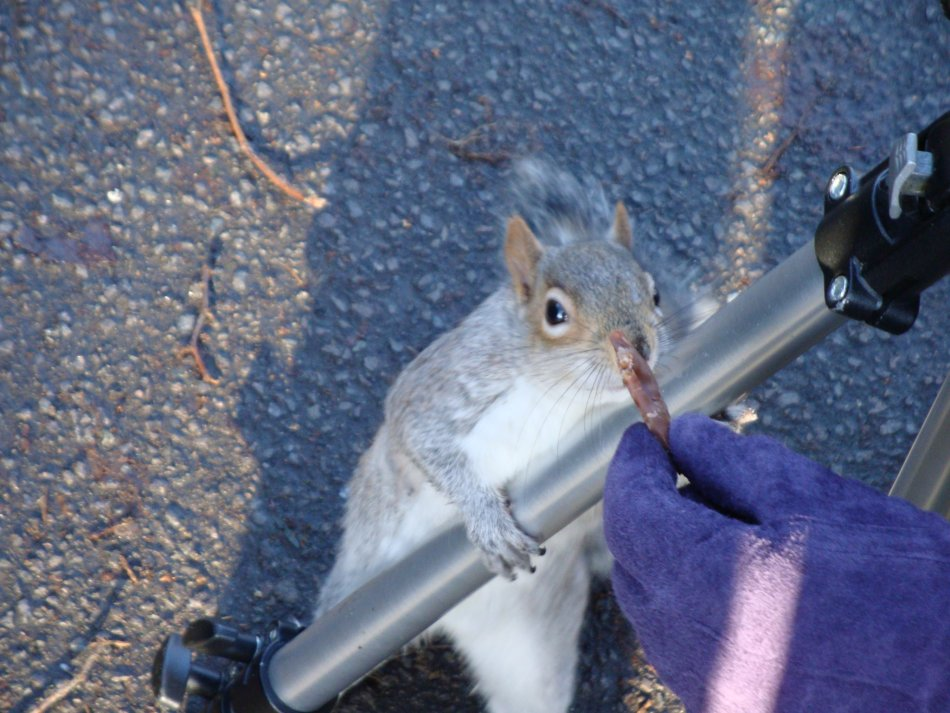 Well do they? These squirrels were insanely tame lol.