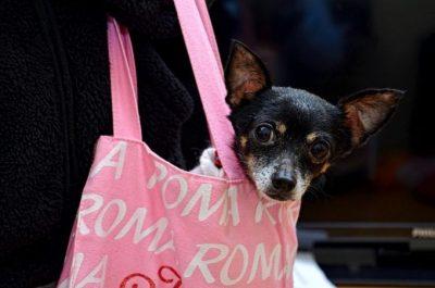 Chihuahua Hundetasche