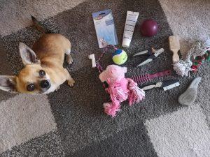 Chihuahua-Pflege-Zubehoer