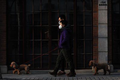 Männer die mit Hunden spazieren gehen mit Atemmaske wegen Coronavirus / Covid-1ß / SARS-CoV-2