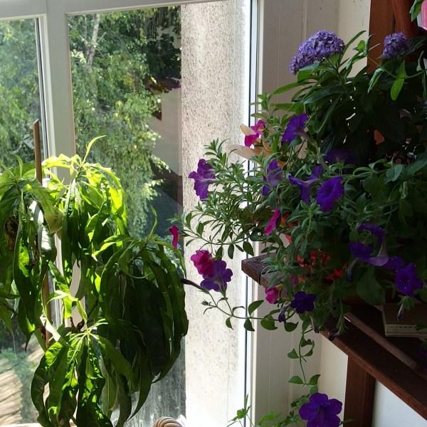 5 Kriterien für die Pflanzenauswahl