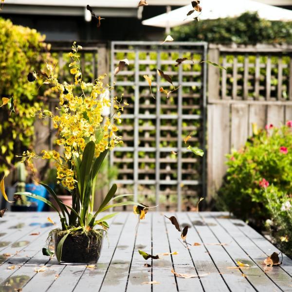 Deinen Gartenraum in 3 Schritten gestalten