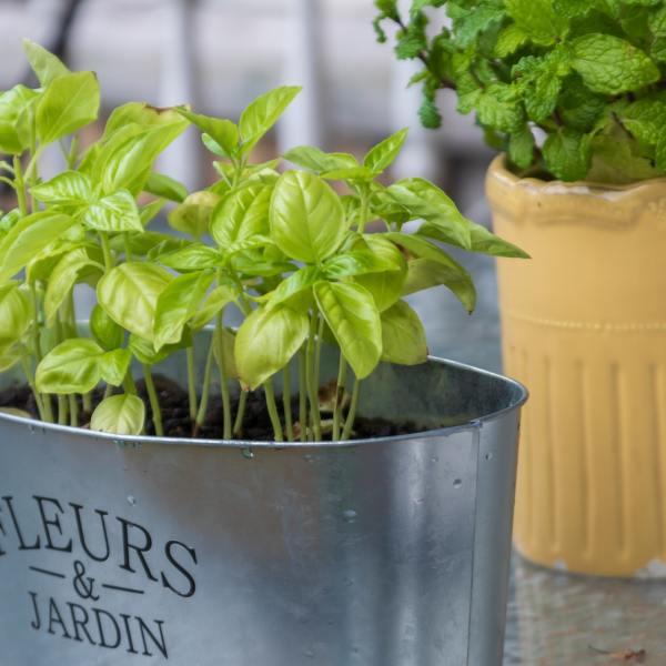 Gemüse auf dem Balkon anbauen: aber bitte mit Stil!