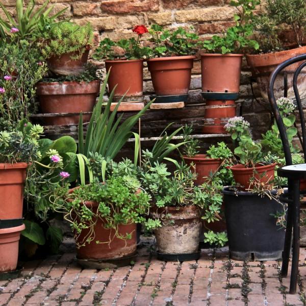 Einen Topfgarten anlegen? 7 gute Gründe