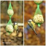 Vogelfütterung für Anfänger