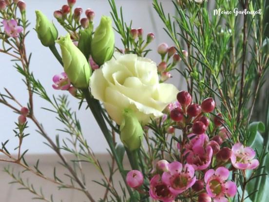 Waxflowers - Tischdeko