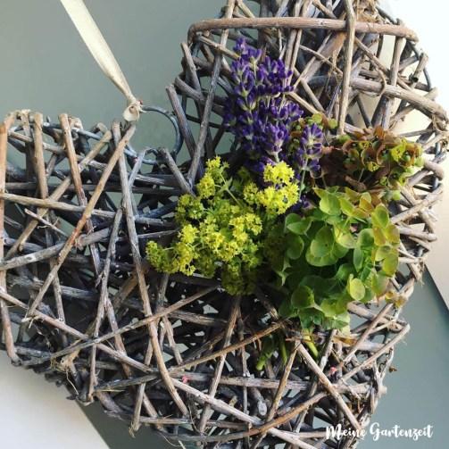 Türdeko mit Lavendel und Frauenmantel