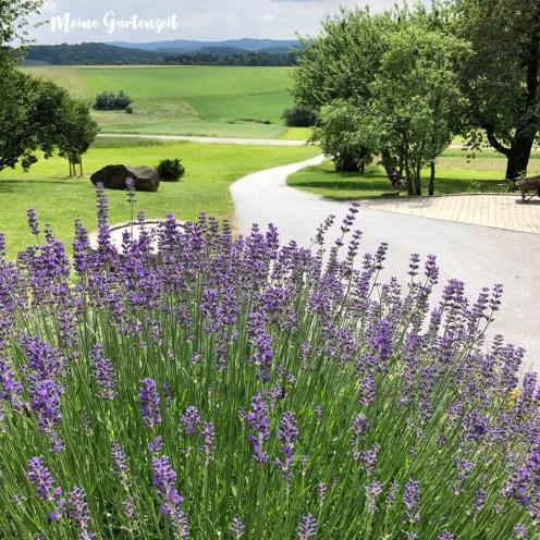 Lavendel mit Ausblick