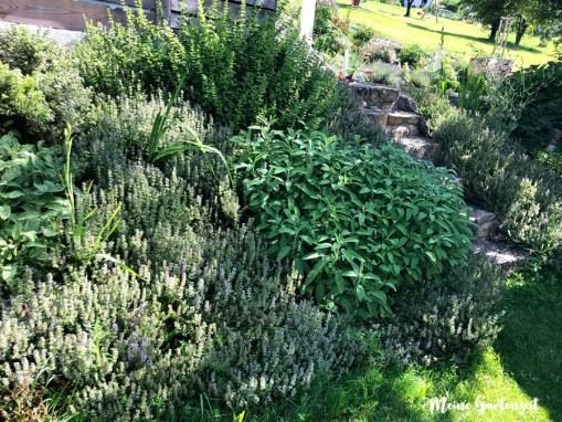 Mein Kräuter-Garten im Juli