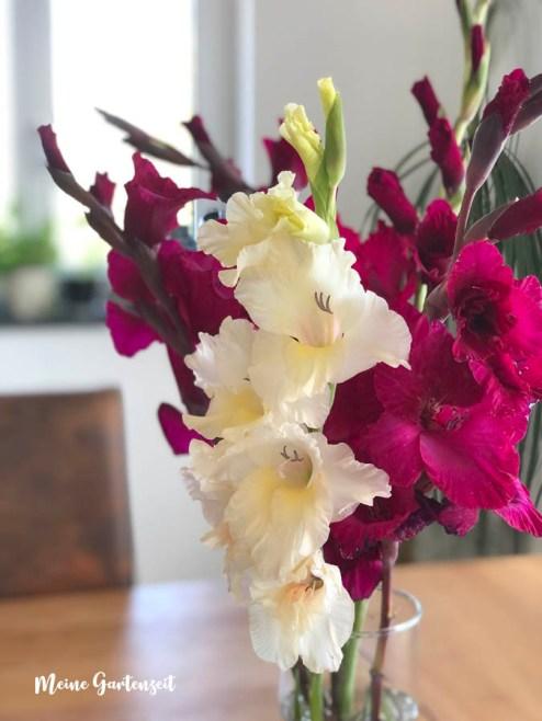 Gladiolen als Schnittblumen