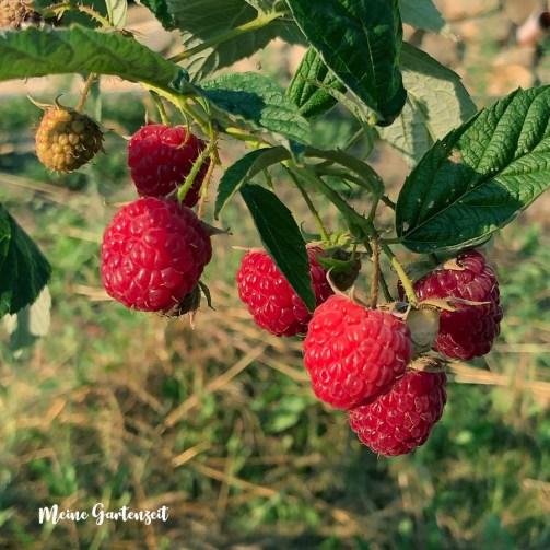 Obstgarten - Verwertung der Ernte