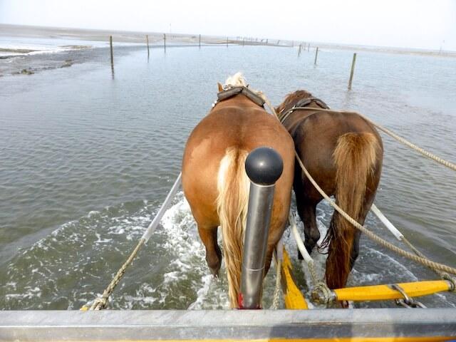 Neuwerk Pferde Wasser