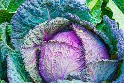 Ernährung bei Krebs - Gemüse