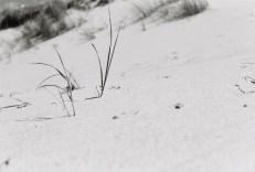 sandstrand-dierhagen-ostsee-fischland