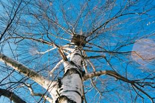 Birke 7 Winter Kodak Ektar